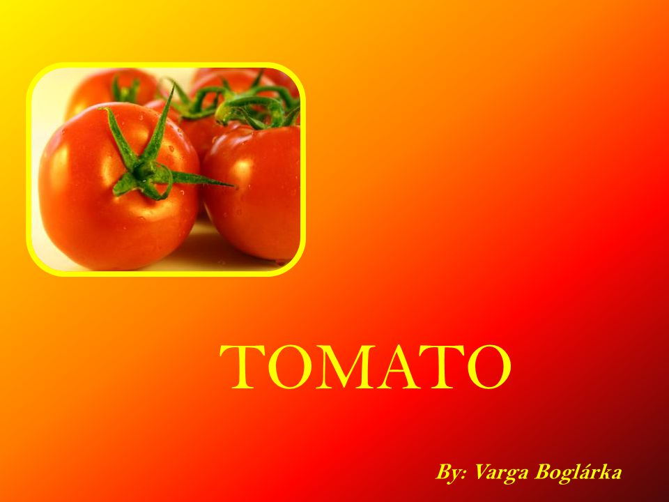 TOMATO By: Varga Boglárka
