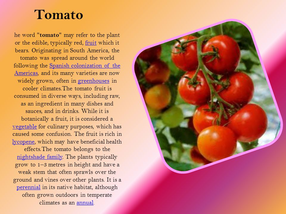 he word tomato may refer to the plant or the edible, typically red, fruit which it bears.