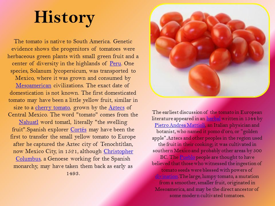History The earliest discussion of the tomato in European literature appeared in an herbal written in 1544 by Pietro Andrea Mattioli, an Italian physician and botanist, who named it pomo d'oro, or golden apple .Aztecs and other peoples in the region used the fruit in their cooking; it was cultivated in southern Mexico and probably other areas by 500 BC.