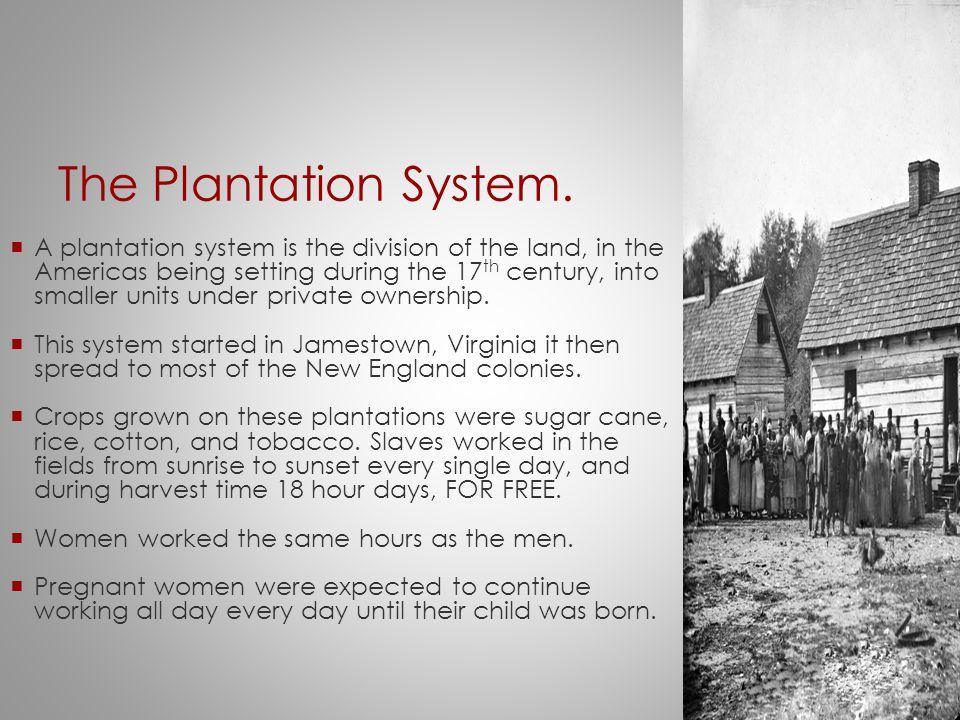 The Plantation System.