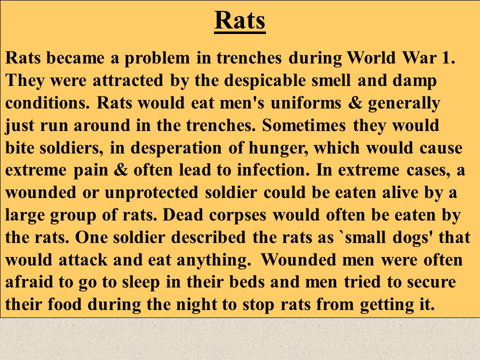 Rats Rats became a problem in trenches during World War 1. They were attracted by the despicable smell and damp conditions. Rats would eat men's unifo