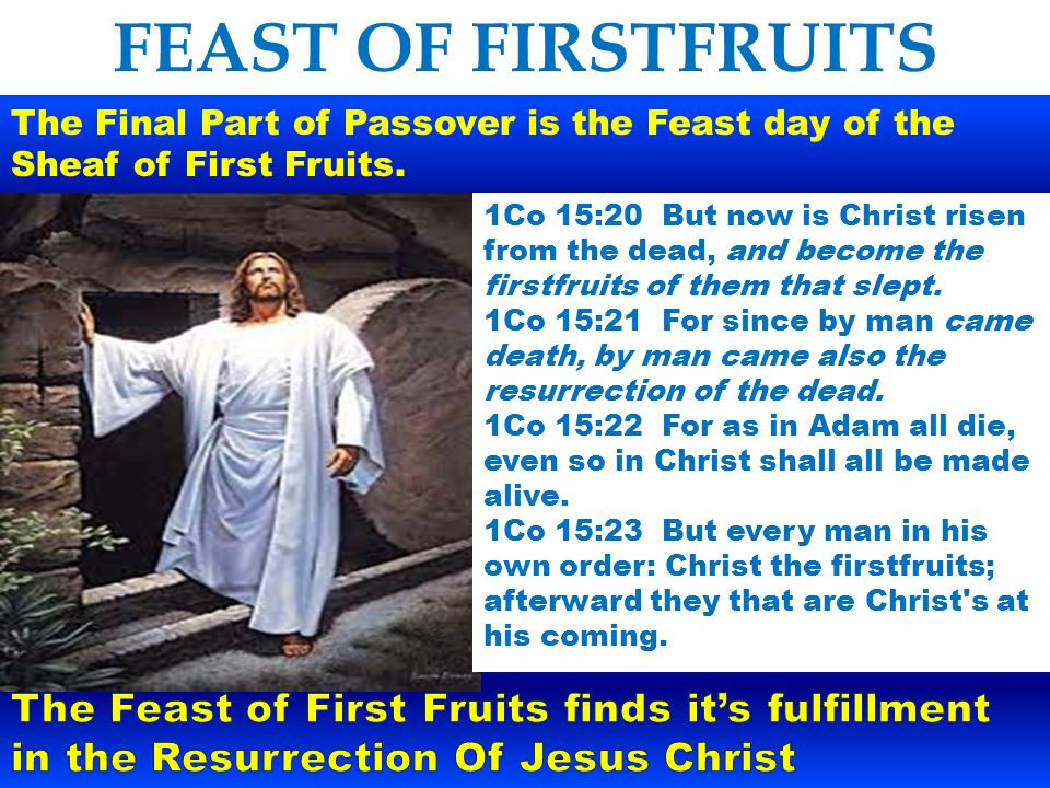 FEAST OF FIRSTFRUITS The standing ripe harvest, barley and wheat would soon be reaped.