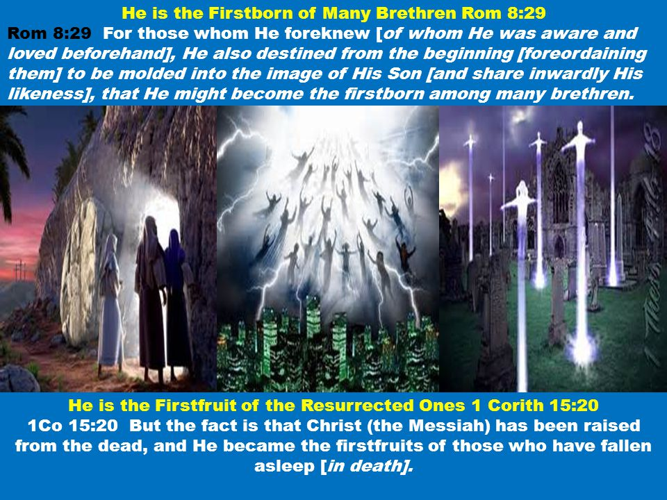 He is the Firstborn of Many Brethren Rom 8:29 Rom 8:29 For those whom He foreknew [of whom He was aware and loved beforehand], He also destined from t