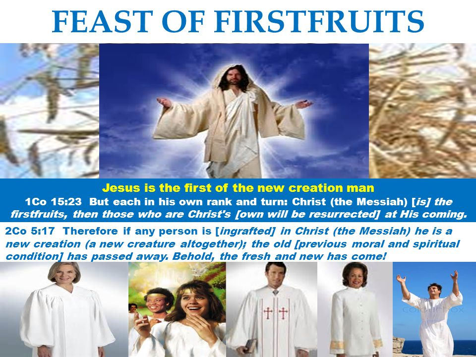 FEAST OF FIRSTFRUITS Jesus is the first of the new creation man 1Co 15:23 But each in his own rank and turn: Christ (the Messiah) [is] the firstfruits