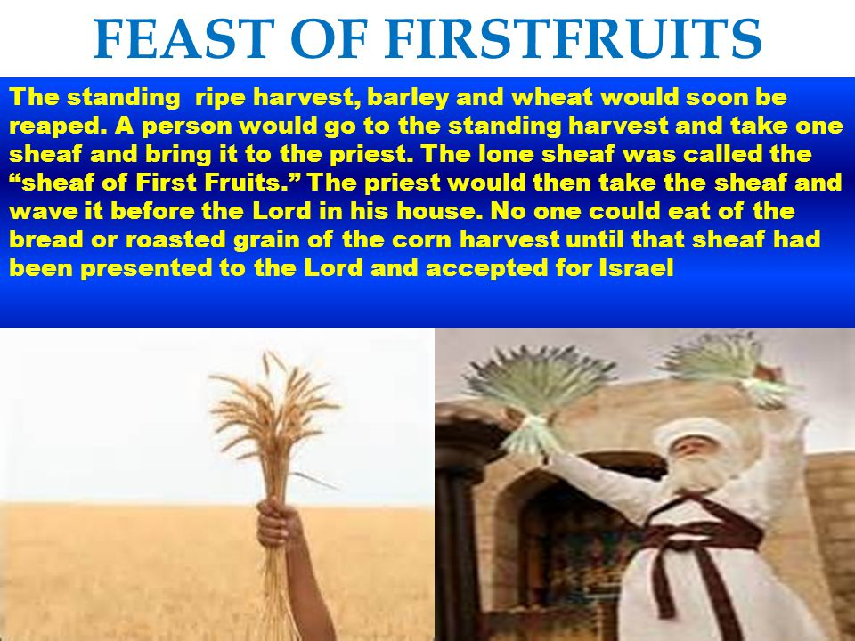 FEAST OF FIRSTFRUITS Lev 23:13 together with its grain offering of two-tenths of an ephah of fine flour mixed with oil--an offering made to the LORD by fire, a pleasing aroma--and its drink offering of a quarter of a hin of wine.