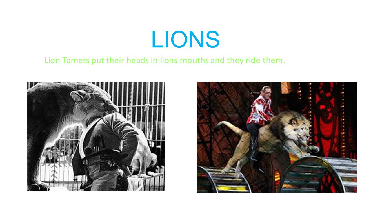 LIONS Lion Tamers put their heads in lions mouths and they ride them.