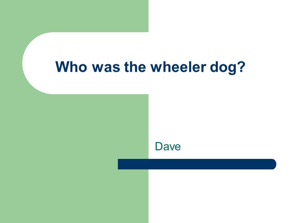 Who was the wheeler dog Dave