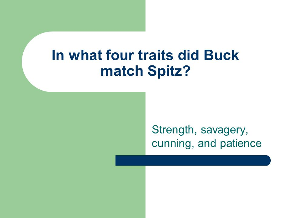 In what four traits did Buck match Spitz? Strength, savagery, cunning, and patience