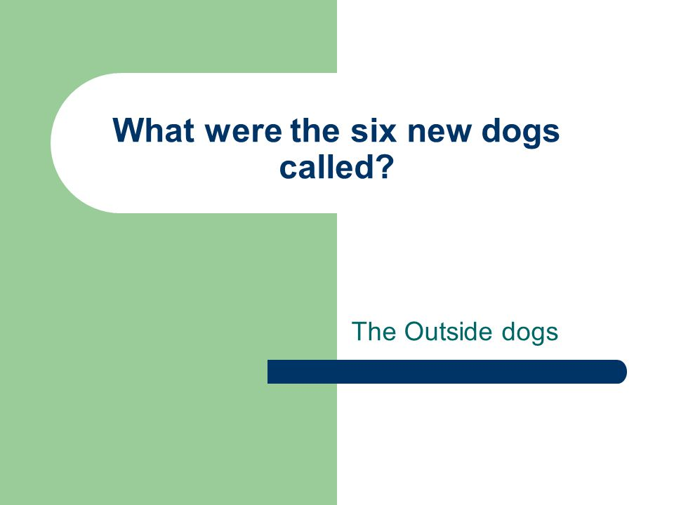 What were the six new dogs called? The Outside dogs