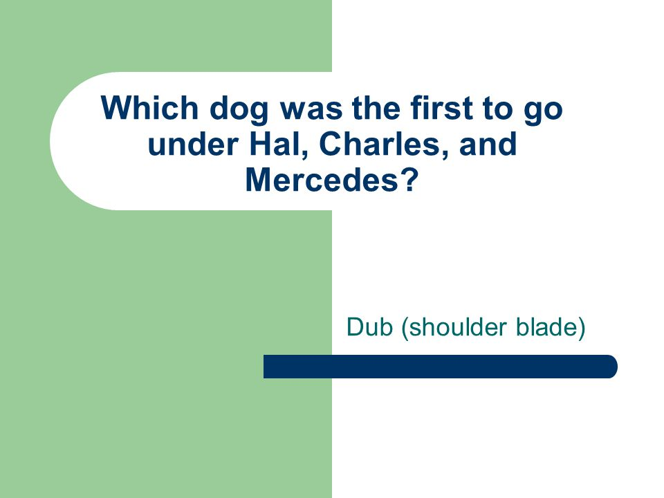 Which dog was the first to go under Hal, Charles, and Mercedes? Dub (shoulder blade)