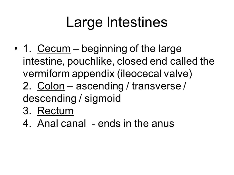Large Intestines 1.