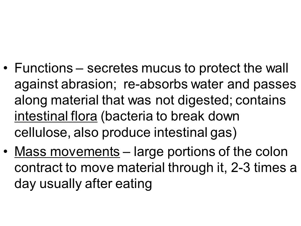 Functions – secretes mucus to protect the wall against abrasion; re-absorbs water and passes along material that was not digested; contains intestinal flora (bacteria to break down cellulose, also produce intestinal gas) Mass movements – large portions of the colon contract to move material through it, 2-3 times a day usually after eating