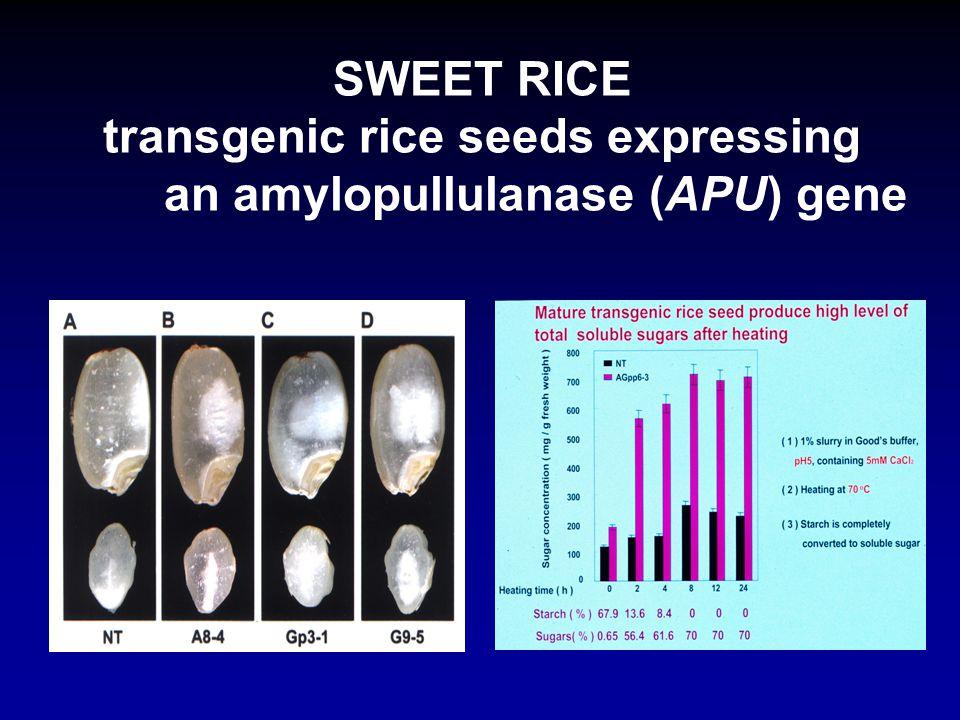 SWEET RICE transgenic rice seeds expressing an amylopullulanase (APU) gene S.M. Yu and J.F. Shaw