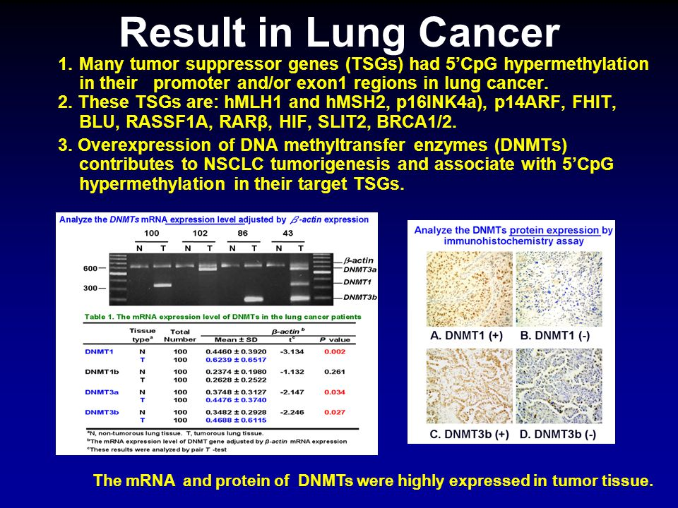 Result in Lung Cancer 1.Many tumor suppressor genes (TSGs) had 5'CpG hypermethylation in their promoter and/or exon1 regions in lung cancer. 2. These