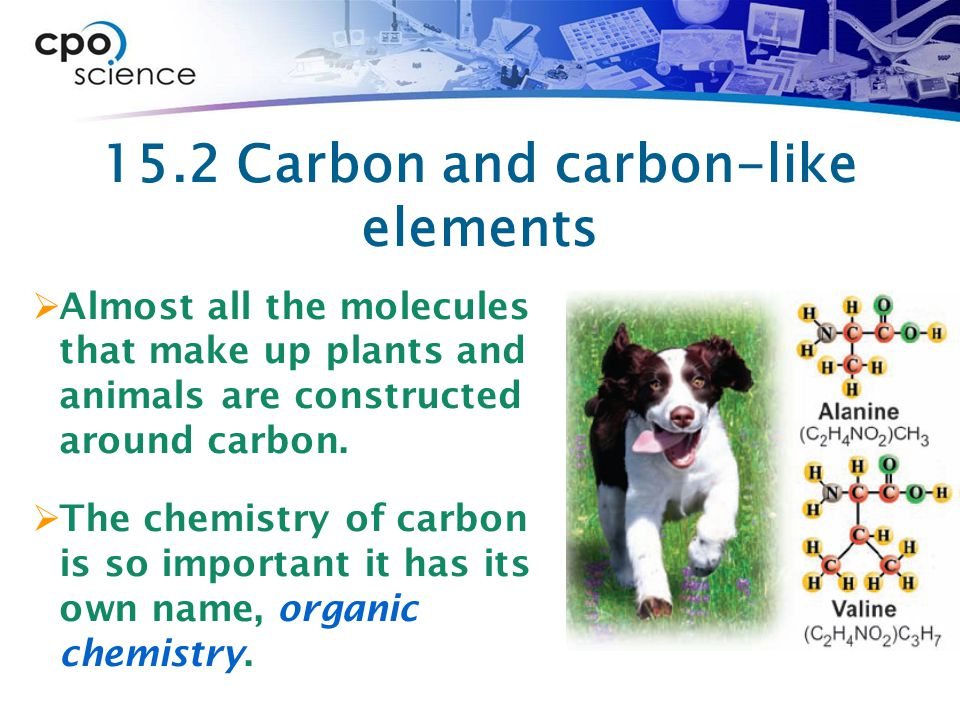 15.2 Carbon and carbon-like elements  Almost all the molecules that make up plants and animals are constructed around carbon.