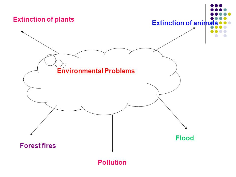 Extinction of plants Extinction of animals Pollution Flood Forest fires