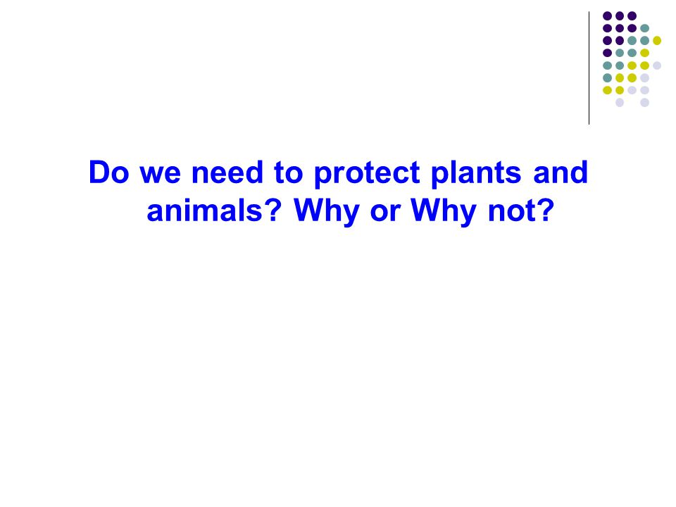 Do we need to protect plants and animals? Why or Why not?