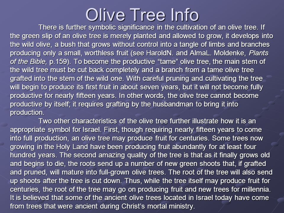Olive Tree Info There is further symbolic significance in the cultivation of an olive tree. If the green slip of an olive tree is merely planted and a