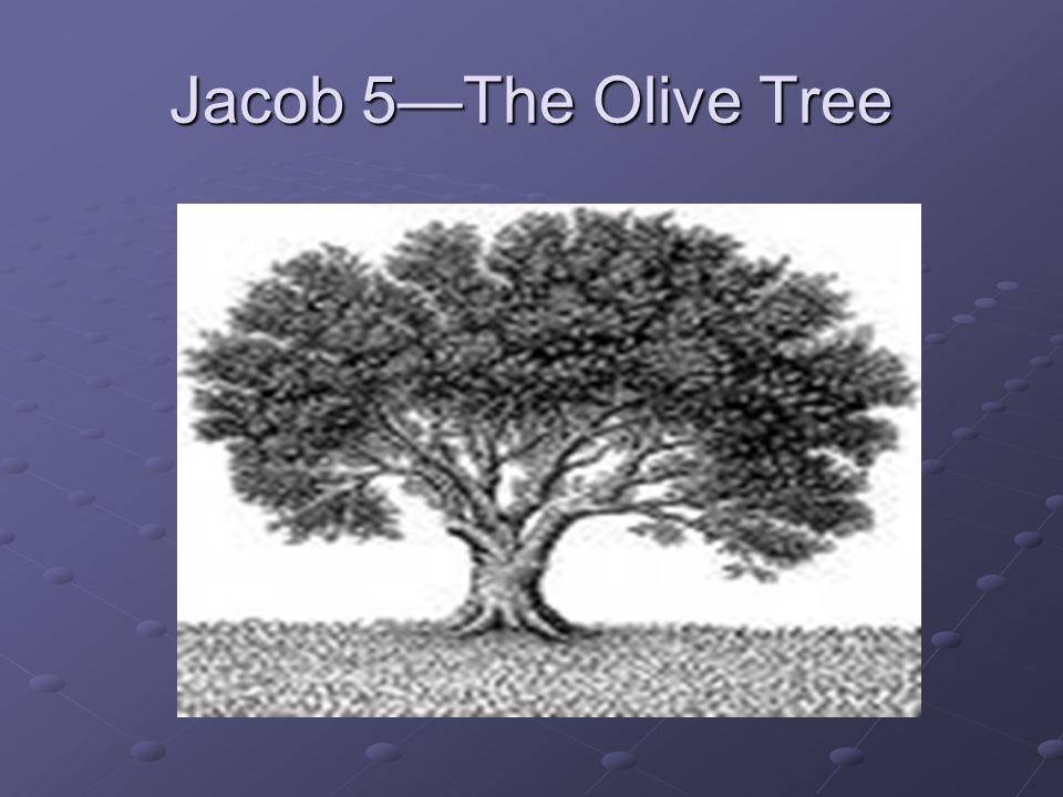 Jacob 5—The Olive Tree