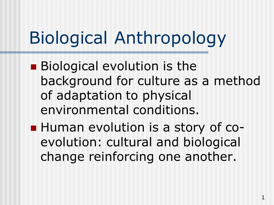 1 Biological Anthropology Biological evolution is the background for culture as a method of adaptation to physical environmental conditions. Human evo