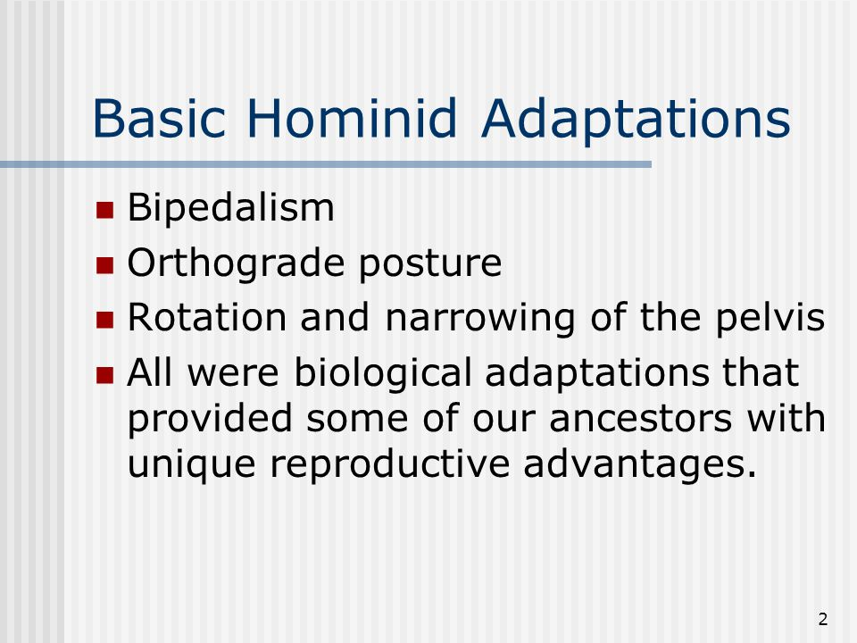 2 Basic Hominid Adaptations Bipedalism Orthograde posture Rotation and narrowing of the pelvis All were biological adaptations that provided some of our ancestors with unique reproductive advantages.