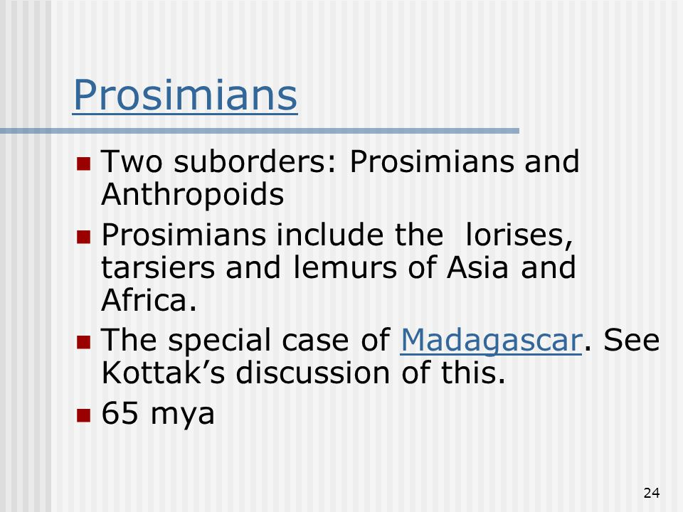 24 Prosimians Two suborders: Prosimians and Anthropoids Prosimians include the lorises, tarsiers and lemurs of Asia and Africa.