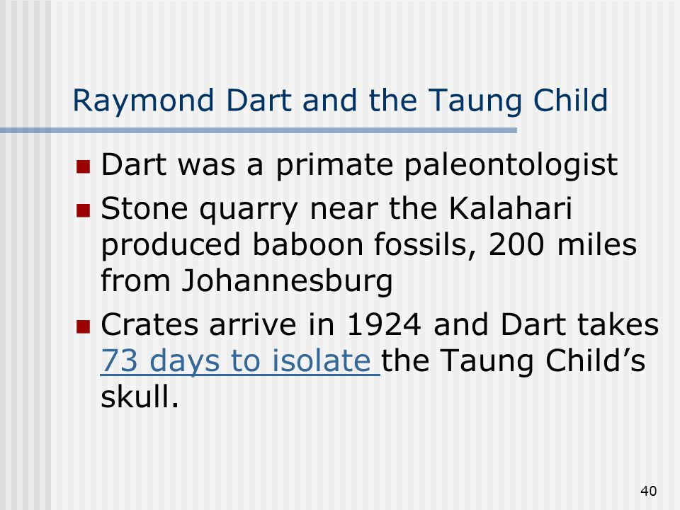 40 Raymond Dart and the Taung Child Dart was a primate paleontologist Stone quarry near the Kalahari produced baboon fossils, 200 miles from Johannesburg Crates arrive in 1924 and Dart takes 73 days to isolate the Taung Child's skull.