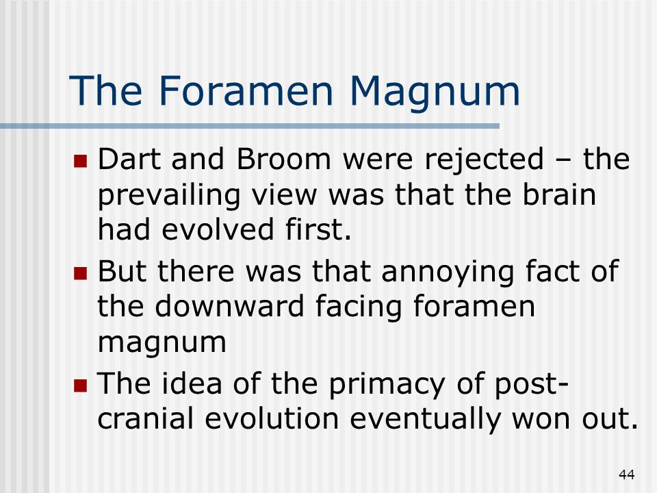 44 The Foramen Magnum Dart and Broom were rejected – the prevailing view was that the brain had evolved first.