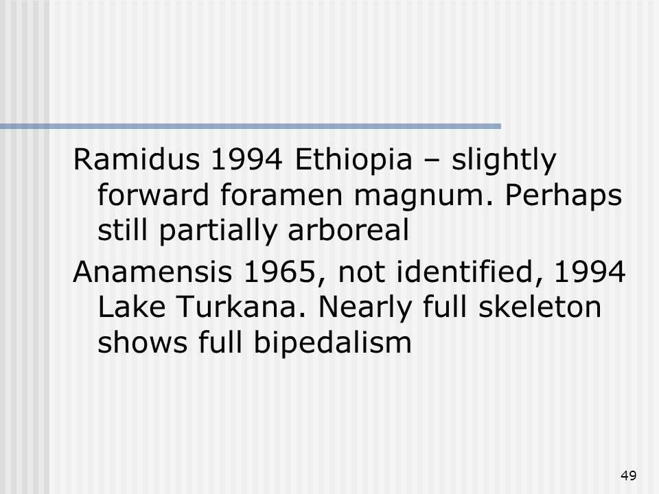 49 Ramidus 1994 Ethiopia – slightly forward foramen magnum. Perhaps still partially arboreal Anamensis 1965, not identified, 1994 Lake Turkana. Nearly
