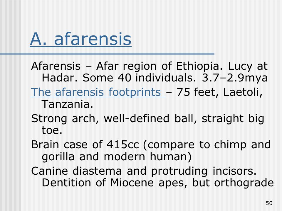 50 A. afarensis Afarensis – Afar region of Ethiopia. Lucy at Hadar. Some 40 individuals. 3.7–2.9mya The afarensis footprints The afarensis footprints