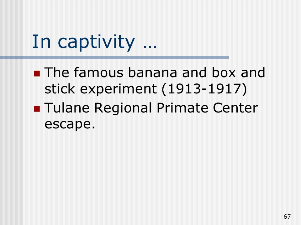 67 In captivity … The famous banana and box and stick experiment (1913-1917) Tulane Regional Primate Center escape.