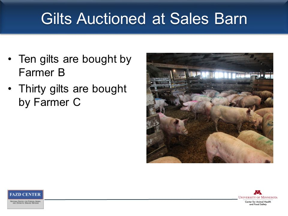 Gilts Auctioned at Sales Barn Ten gilts are bought by Farmer B Thirty gilts are bought by Farmer C