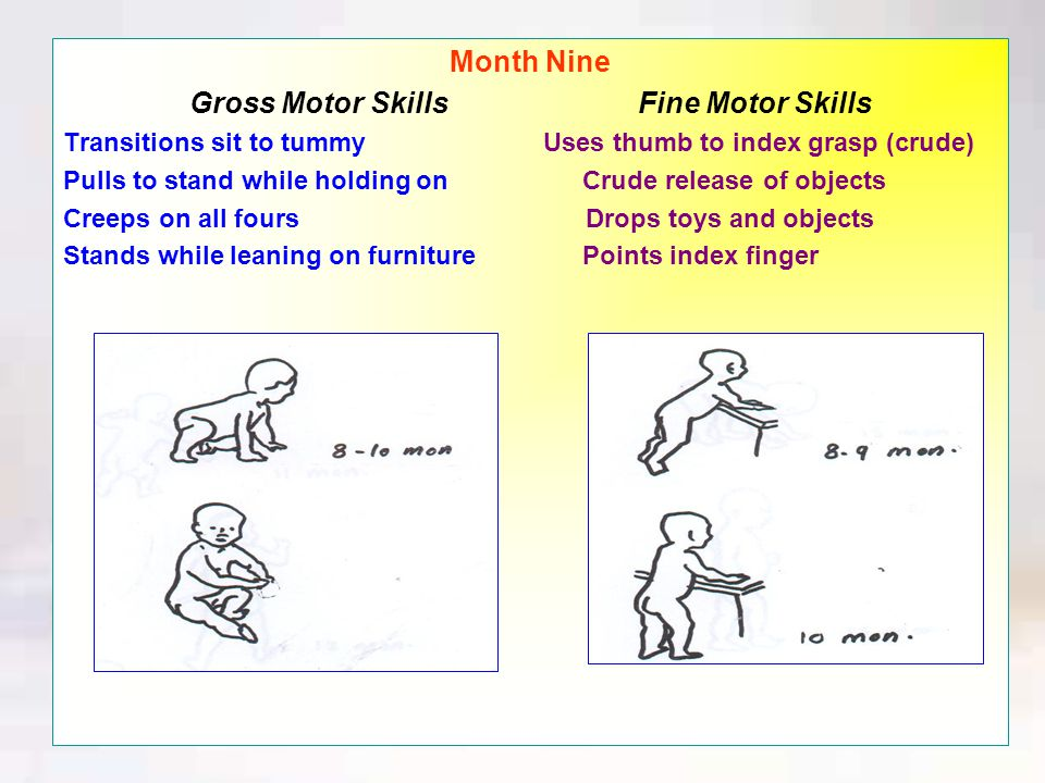 Month Eight Gross Motor Skills Fine Motor Skills Transitions tummy to sit Bangs cubes together Crawls forward Uses a three-fingered grasp Reaches while on tummy
