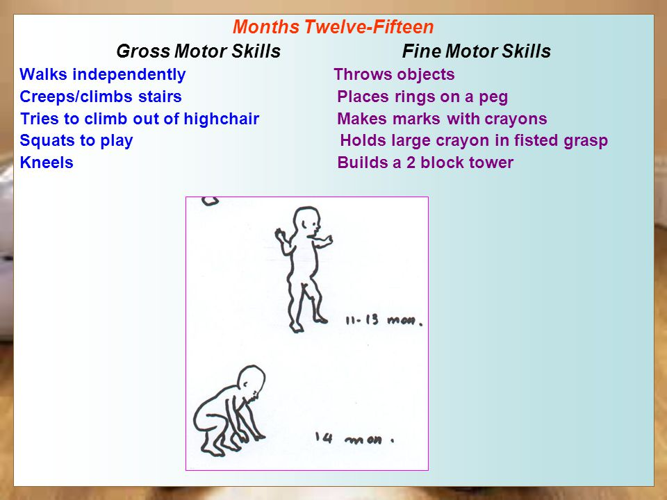 Month Twelve Gross Motor Skills Fine Motor Skills First independent steps Puts objects in a container Stands unsupported~12 seconds Releases an object precisely Assumes/maintains kneeling Stacks two one-inch cubes