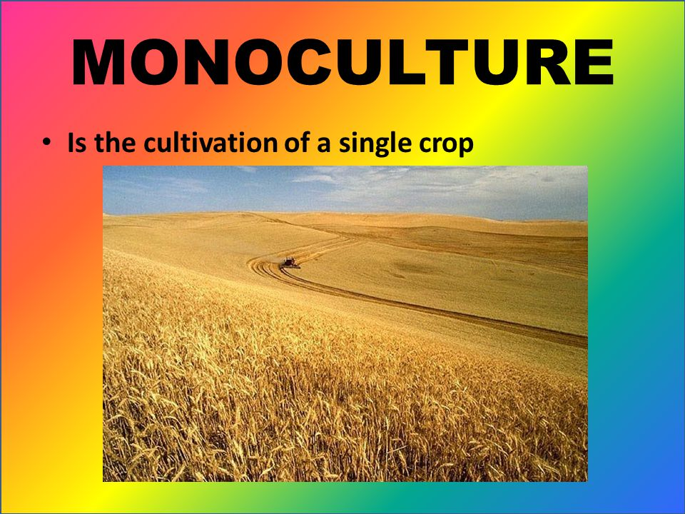 MONOCULTURE Is the cultivation of a single crop