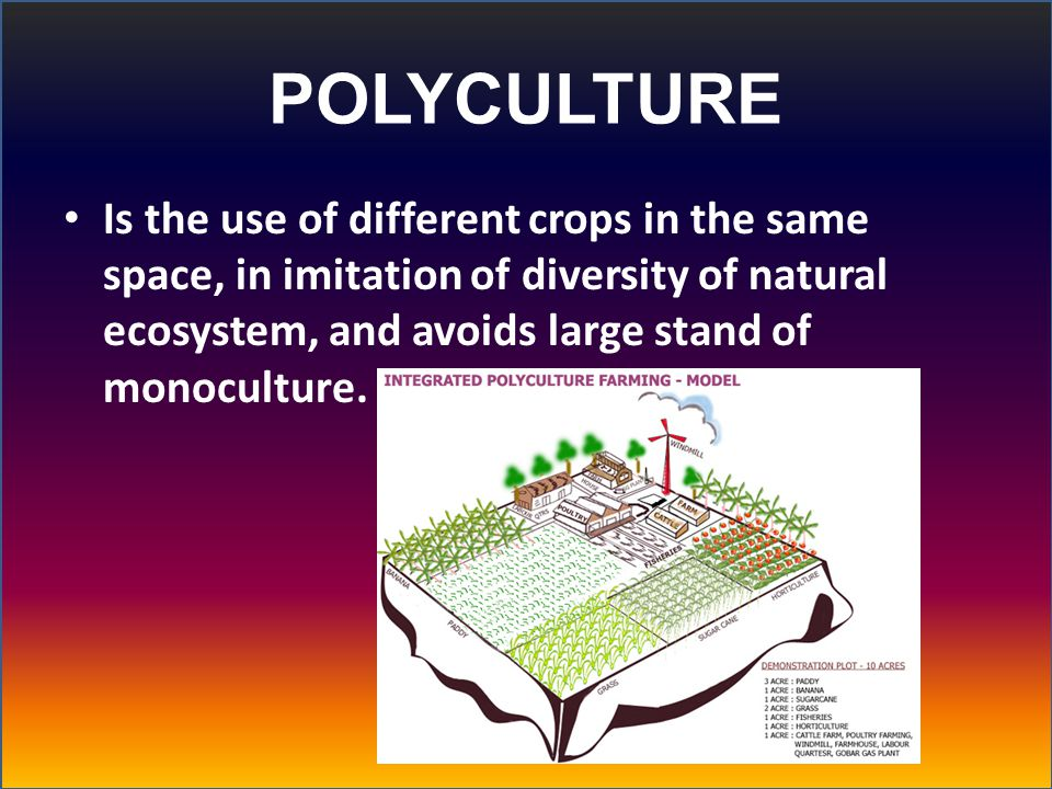 POLYCULTURE Is the use of different crops in the same space, in imitation of diversity of natural ecosystem, and avoids large stand of monoculture.