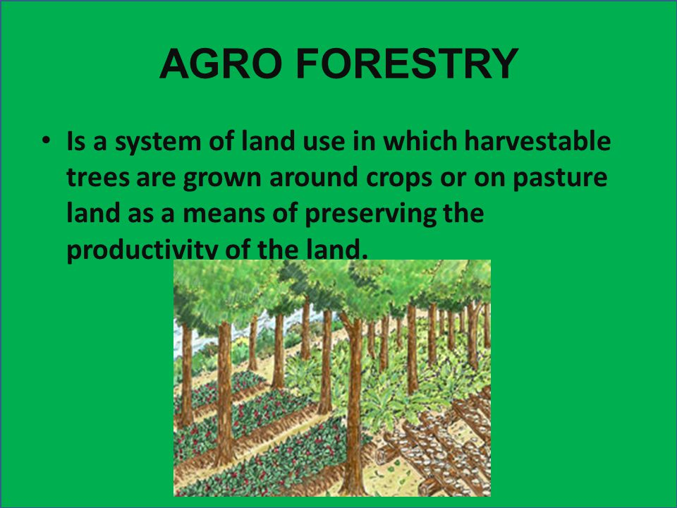 REVIEW 4. Why is agriculture important? -It provides a source of food for the world