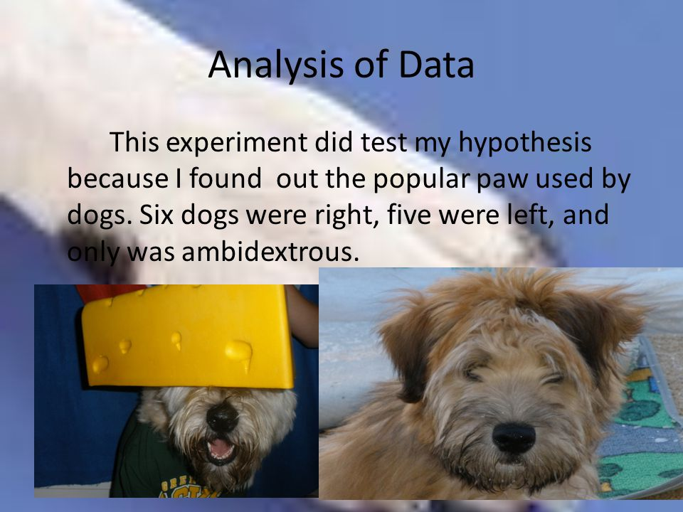Analysis of Data This experiment did test my hypothesis because I found out the popular paw used by dogs. Six dogs were right, five were left, and onl