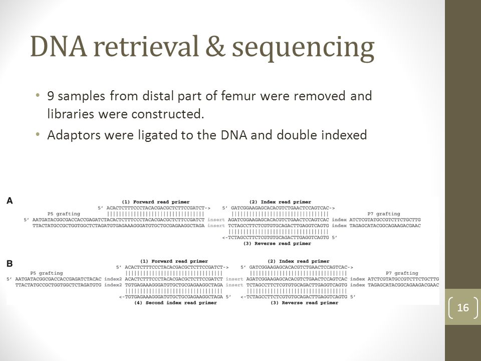 DNA retrieval & sequencing 9 samples from distal part of femur were removed and libraries were constructed. Adaptors were ligated to the DNA and doubl
