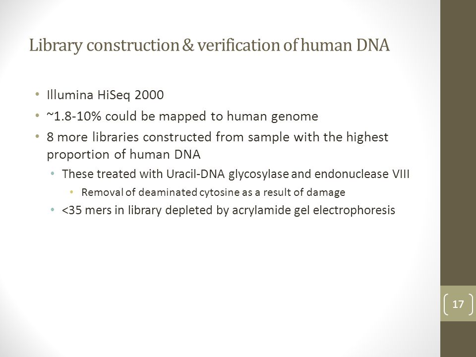 Library construction & verification of human DNA Illumina HiSeq 2000 ~1.8-10% could be mapped to human genome 8 more libraries constructed from sample with the highest proportion of human DNA These treated with Uracil-DNA glycosylase and endonuclease VIII Removal of deaminated cytosine as a result of damage <35 mers in library depleted by acrylamide gel electrophoresis 17
