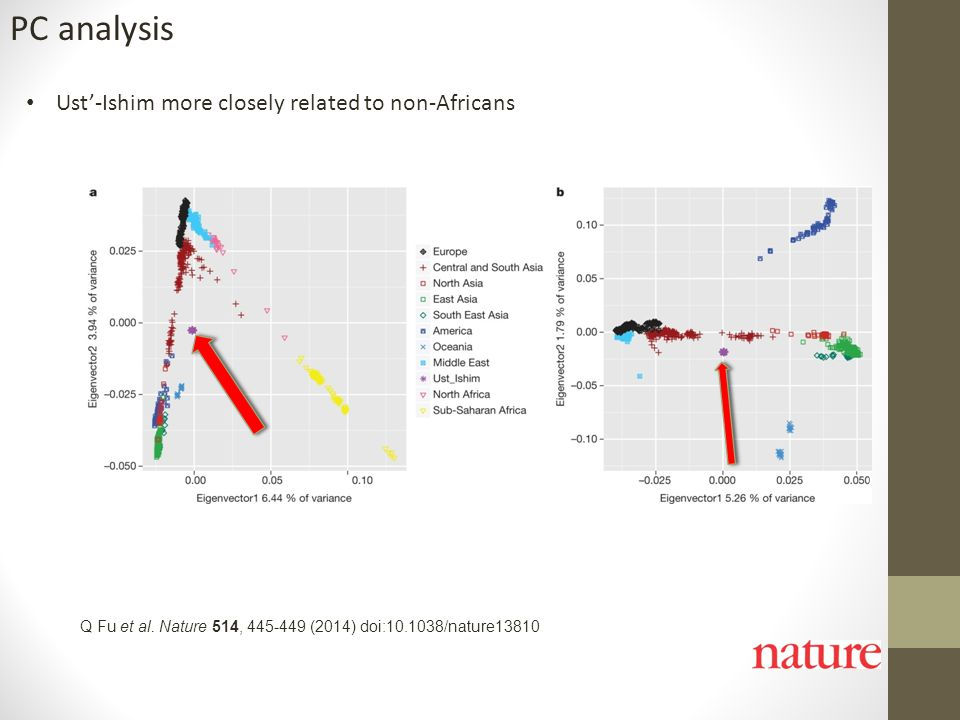 Q Fu et al. Nature 514, 445-449 (2014) doi:10.1038/nature13810 PC analysis Ust'-Ishim more closely related to non-Africans