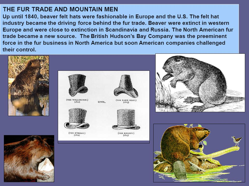 John Jacob Astor established the American Fur Company in 1808.