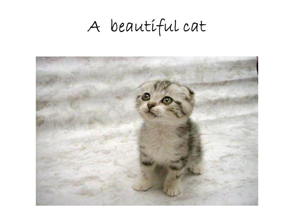 A beautiful cat