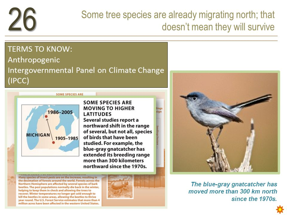 Some tree species are already migrating north; that doesn't mean they will survive26 TERMS TO KNOW: Anthropogenic Intergovernmental Panel on Climate Change (IPCC) The blue-gray gnatcatcher has moved more than 300 km north since the 1970s.