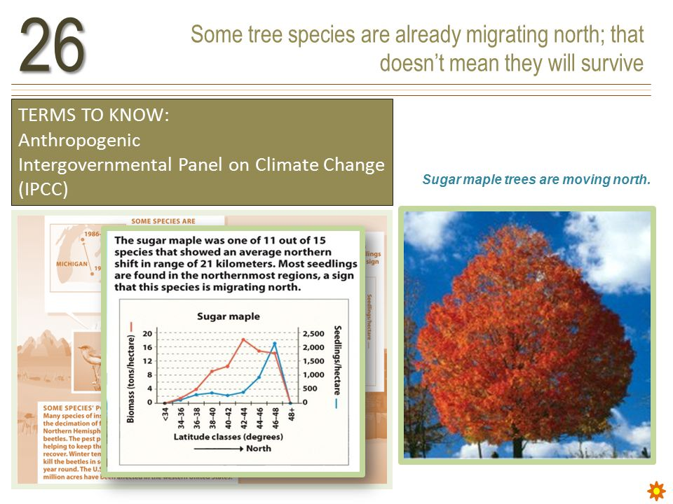 Some tree species are already migrating north; that doesn't mean they will survive26 TERMS TO KNOW: Anthropogenic Intergovernmental Panel on Climate Change (IPCC) Sugar maple trees are moving north.