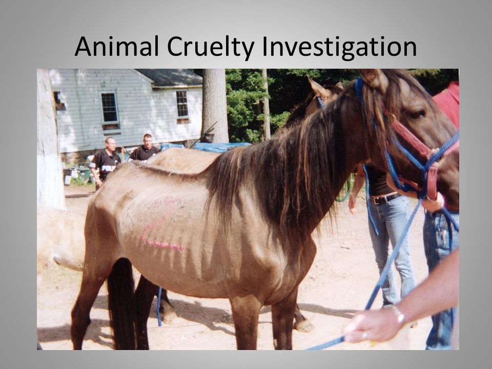 Animal Cruelty Investigation