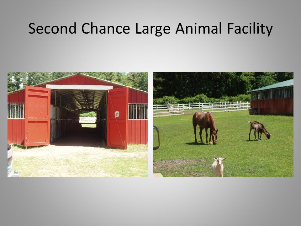 Second Chance Large Animal Facility
