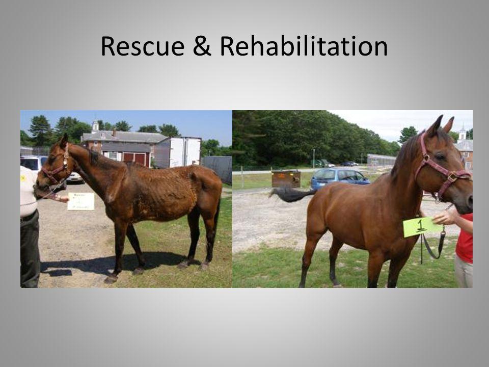 Rescue & Rehabilitation