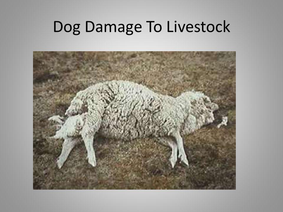 Dog Damage To Livestock