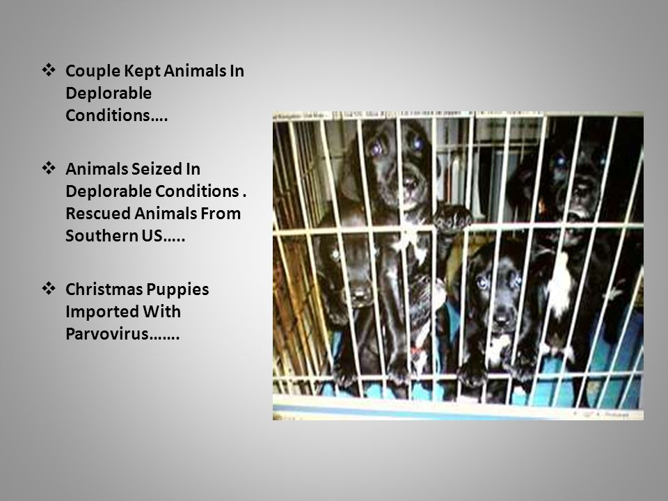  Couple Kept Animals In Deplorable Conditions….  Animals Seized In Deplorable Conditions.